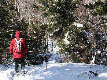 Snowshoe Class Ludington Michigan Wooden Native