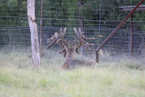 a deer hunters dream in North America