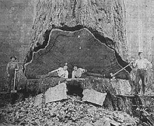 Logging in Republic Michigan