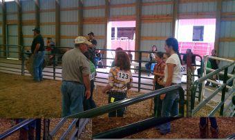 Swine judge at the Marquette County Fair