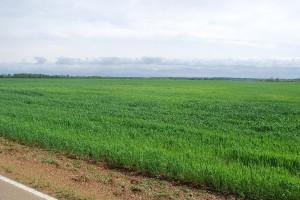 plantation field