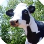 Jilbert Dairy Jilly