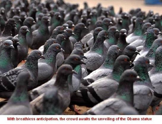Pigeons Enjoying the Day