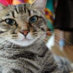 Eric Scott would like a cat for a pet. Good idea? Bad idea?