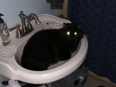 On_The_Job_Emilio_The_Cat_021920