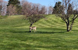 On_The_Job_Deer_Golf_052920