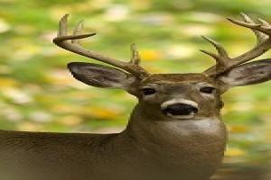 Michigan DNR wants hunter input on 2020 deer hunting regulations May 15, 2020